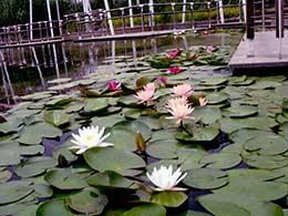 Shaghai Houtan Park