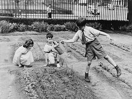 Ο Σχολικός κήπος