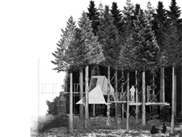 In the Woods. Alterable living conditions in an evergreen landscape