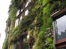 Πράσινοι Τοίχοι – Κάθετοι Κήποι