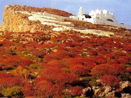 Η Ελληνική φύση των Φρυγάνων (της ευωδιάς και του ανθού...)