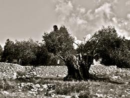 Το ελληνικό τοπίο