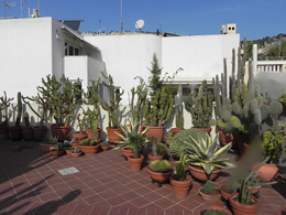 Πράσινα μπαλκόνια στο γκρίζο της πόλης